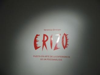 erizo (6)